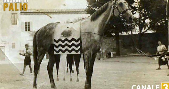 Ruello il cavallo che vinse il Palio del 2 luglio 1935